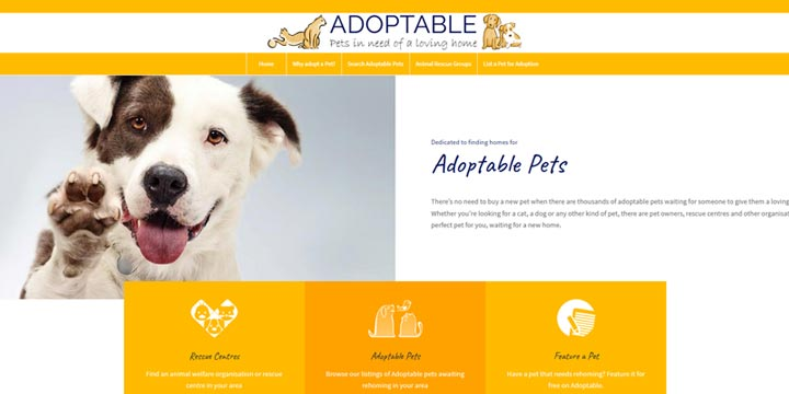 Adoptable - cats and dogs for adoption